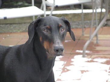 Jasper 1