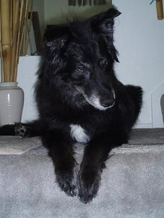 Duffy 3 stairs