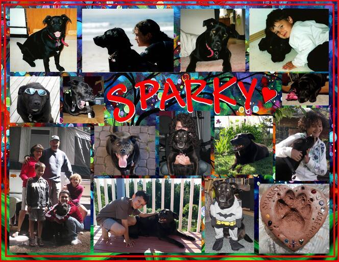 sparky1  (2)